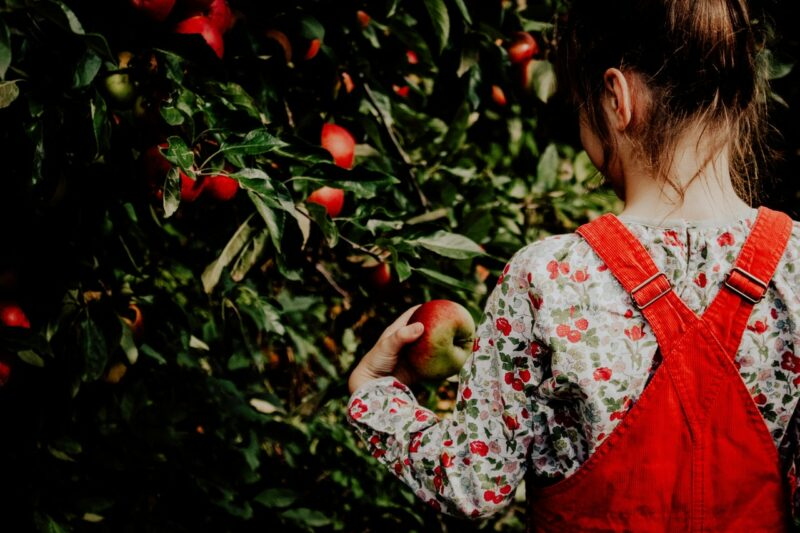 little girl apple picking fall nostalgia