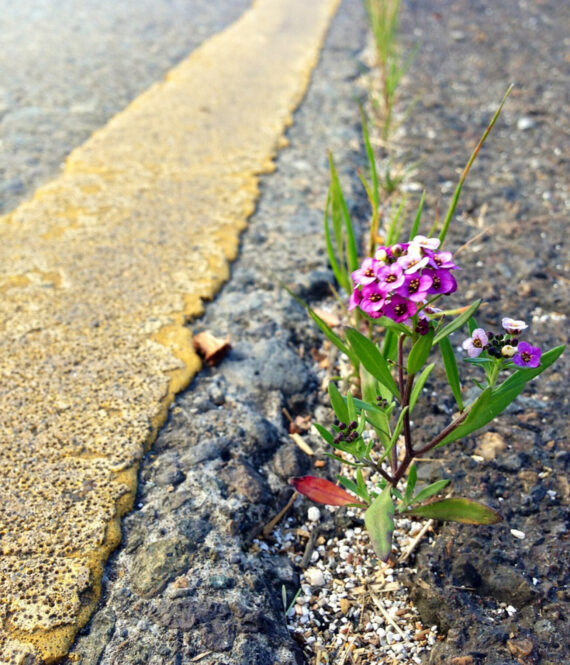 flower coming out of pavement represents grit